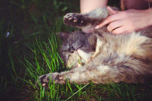 Nicht nur Tiere können von Parasiten befallen sein (Bild: © Ruslan Sitarchuk - shutterstock.com)